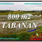 JUAL TANAH MURAH di TABANAN 800 m2 View laut dan sawah