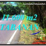 TANAH MURAH di TABANAN BALI DIJUAL 116 Are di Tabanan Selemadeg