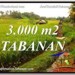 TANAH MURAH di TABANAN BALI DIJUAL Untuk INVESTASI TJTB328