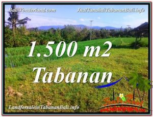 TANAH MURAH JUAL   TABANAN 1,500 m2  View sawah