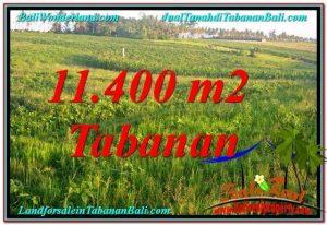 TANAH MURAH DIJUAL di TABANAN 11,400 m2 di Tabanan Selemadeg
