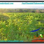 TANAH DIJUAL di TABANAN BALI Untuk INVESTASI TJTB339
