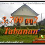 JUAL MURAH TANAH di TABANAN BALI 3,700 m2 View Kebun