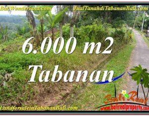 TANAH MURAH di TABANAN DIJUAL 6,000 m2 di Tabanan Selemadeg