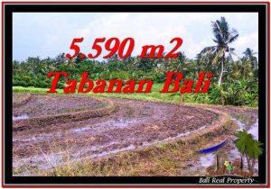 INVESTASI PROPERTY, JUAL TANAH MURAH di TABANAN TJTB257