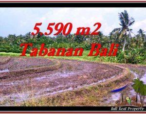 TANAH DIJUAL MURAH di TABANAN TJTB257