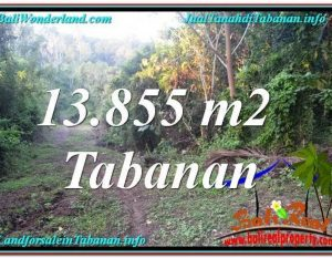 TANAH MURAH di TABANAN DIJUAL 138.55 Are di Tabanan Selemadeg