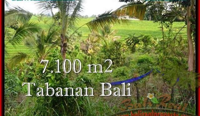 JUAL MURAH TANAH di TABANAN BALI 71 Are View sawah dan Kebun