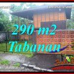 TANAH MURAH di TABANAN BALI DIJUAL 2.9 Are di Tabanan Penebel