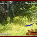 TANAH MURAH di TABANAN DIJUAL 101 Are di Tabanan Selemadeg Barat
