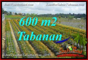 JUAL TANAH MURAH di TABANAN BALI 600 m2 view kebun dan Gunung