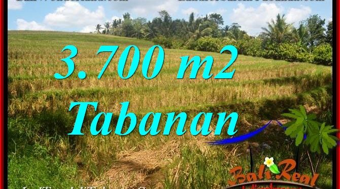 TANAH MURAH JUAL TABANAN 37 Are View Sawah dan Sungai