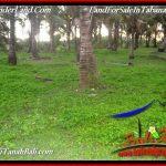 TANAH JUAL MURAH TABANAN BALI 7,500 m2 VIEW KEBUN, LINGKUNGAN VILLA
