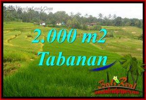 Tanah Dijual di Tabanan Bali 20 Are di Tabanan Selemadeg