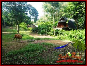 JUAL Murah Tanah di Tabanan 34 Are View Kebun dan Sungai
