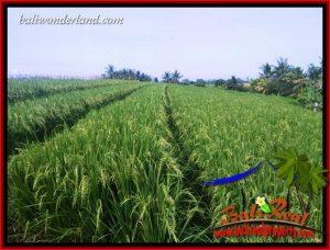 JUAL Murah Tanah di Tabanan 25.94 Are View Sawah, Gunung dan Sungai Kecil
