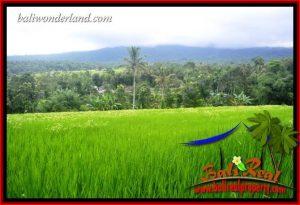 Tanah Murah Dijual di Tabanan Untuk Investasi TJTB416