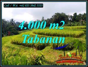 JUAL TANAH MURAH di TABANAN BALI 4,000 m2 di PENEBEL TABANAN