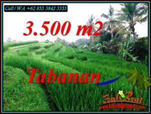 JUAL TANAH MURAH di TABANAN 35 Are di SELEMADEG TIMUR TABANAN