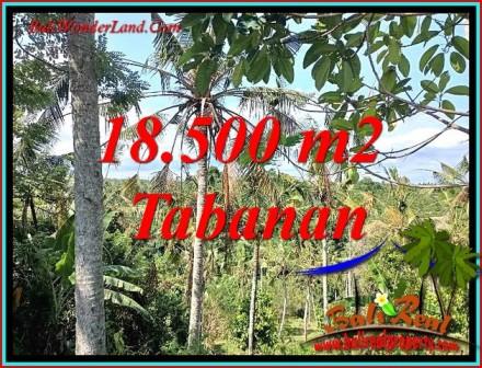 TANAH MURAH di TABANAN BALI 18,500 m2 di SELEMADEG BARAT